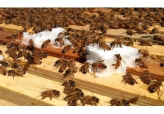 Krmení včel